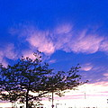 Blue And Purple Skies At Sunset by Elisabeth Ann