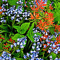Blue And Red Flowers In Kuekenhof Flower Park-netherlands by Ruth Hager
