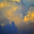 Blue And Yellow Clouds At Sunset With Birds Usa by Sally Rockefeller