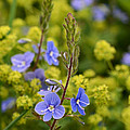 Blue And Yellow by Minartesia