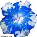 Blue Appaloosa by Bruce Nutting