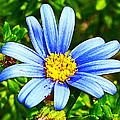 Blue Aster In Park Sierra Near Coarsegold-california   by Ruth Hager