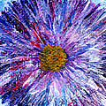 Blue Aster Miniature Painting by Regina Valluzzi