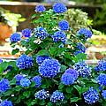 Blue At Bonaventure by Kay Mathews