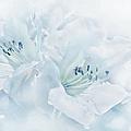Blue Azalea Flowers by Jennie Marie Schell