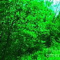Blue Background Branches by Paddy Shaffer
