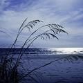 Blue Beach by David and Carol Kelly