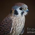 Blue Beak by Robin Maria Pedrero