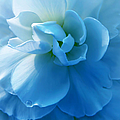 Blue Begonia Flower by Jennie Marie Schell