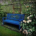 Blue Bench With Roses by Patricia Strand