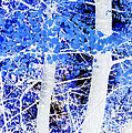 Blue Birch Trees by Jim And Emily Bush