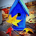 Blue Bird House by Rodney Lee Williams