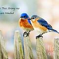 Blue Bird Love Notes by Scott Pellegrin