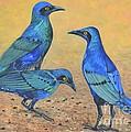 Blue Birds Of Happiness by Caroline Street