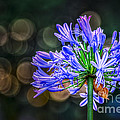 Blue Blooms by Marvin Spates