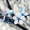 Blue Blossoms by Debra Thompson