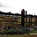 Blue Bonnet Fence V4 by Douglas Barnard