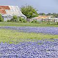 Blue Bonnets Barn V2 by Douglas Barnard