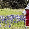 Blue Bonnets Fire Hydrant V2 by Douglas Barnard