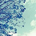Blue Branches by Cathie Tyler