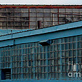 Blue Building Windows by Karen Adams