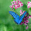 Blue Butterfly by Bruce Nutting