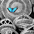 Blue Butterfly Charleston by William Dey