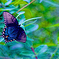Blue Butterfly Fantasy by Linda Mcfarland