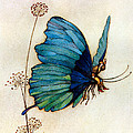 Blue Butterfly II by Warwick Goble