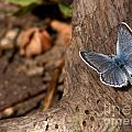 Blue Butterfly by Russell Smith
