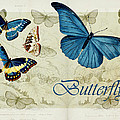 Blue Butterfly - S01a by Variance Collections