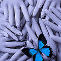 Blue Butterfly With Gary Hands by Garry Gay