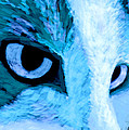 Blue Cat Face by Ann Powell