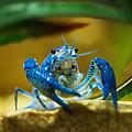 Blue Crab by Marilyn Hunt