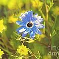 Blue Daisy by Yew Kwang