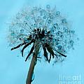 Blue Dandelion Wish by Krissy Katsimbras