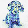 Blue Dapple Dachshund Puppy by Jane Schnetlage