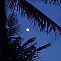 Blue Dawn Moon by Lehua Pekelo-Stearns