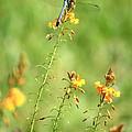 Blue Dragonfly In The Flower Garden by Carol Groenen