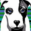 Blue Eyed Bully by Cindy Edwards