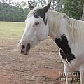 Medicine Hat Horse by Donna Brown
