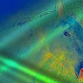 Blue Eyed Horse by Ernestine Manowarda