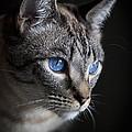 Blue Eyes by Diane Macdonald