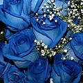 Blue Fire And Ice Roses by Gail Matthews