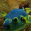 Blue Fish by Carolyn Jones