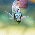 Blue Fish by Pati Photography