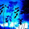 Blue Flower by Abby Kirsch