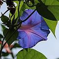 Blue Flower by Mike Jarrett