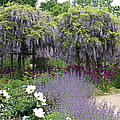 Blue Flowergarden With Wisteria by Christiane Schulze Art And Photography