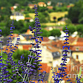 Blue Flowers And Rooftops In Sarlat by Elena Elisseeva
